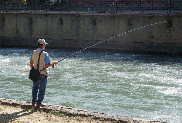 В Ростовской области рыбак выловил гигантского сома