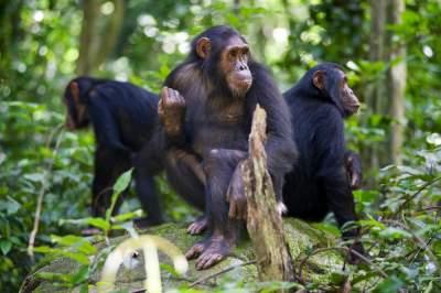 Надоедливых таиландских макак переселят на необитаемые острова