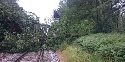 Мощный шторм в Польше: дерево убило заместителя мэра