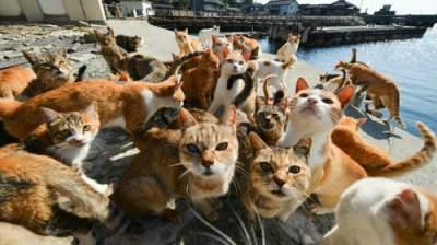 В Британии директор купил кошек, ограбив фирму на полмиллиона долларов