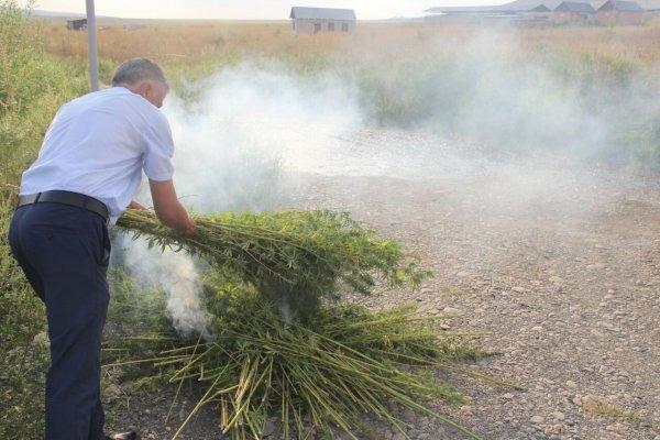 Казаки уничтожают огнём делянки с коноплёй под Ростовом