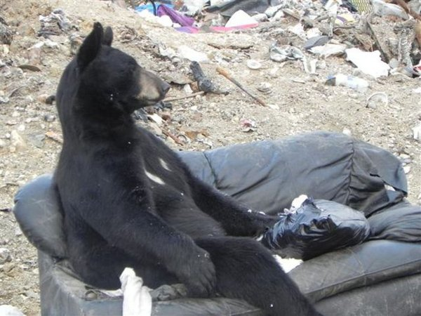 Медвежонок хулиганил на парковке в Красноярске