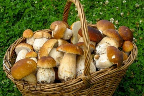 В центре города Владивосток начался грибной сезон