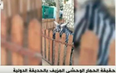 Крашенные ослы вместо зебр: в каирском зоопарке выявили подвох