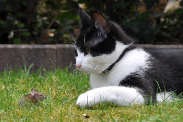 Стартап выращивает мясо мышей для кошек вегетарианцев