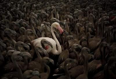 В Испании появилось на свет рекордное число фламинго