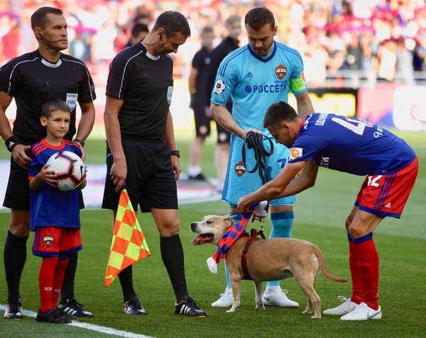 Капитаны ЦСКА и «Арсенала» вышли на поле перед игрой с собаками