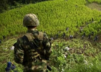 Колумбийцы придумали инновационный способ борьбы с выращиванием наркотиков