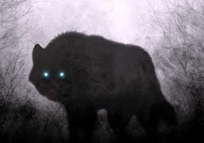 В Беларуси охотятся на неизвестного зверя-убийцу