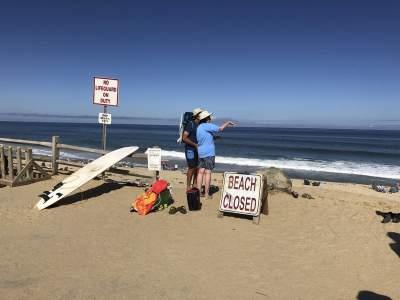 В США на одном из пляжей акула убила человека