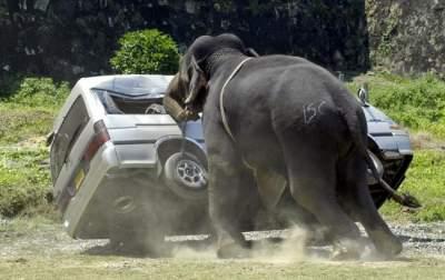 В Зимбабве слон напал на туристку