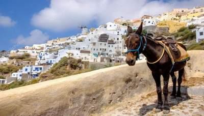 В Греции ввели необычное ограничение для толстых туристов