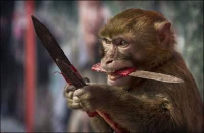 Агрессивные обезьяны насмерть забросали пенсионера камнями