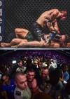 Нурмагомедов победил Макгрегора в бою удушающим приемом