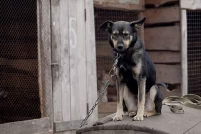 В Южной Корее самую крупную бойню собак превратят в парк