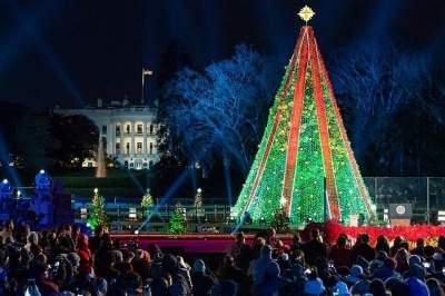 Американец повредил новогоднюю елку перед Белым домом