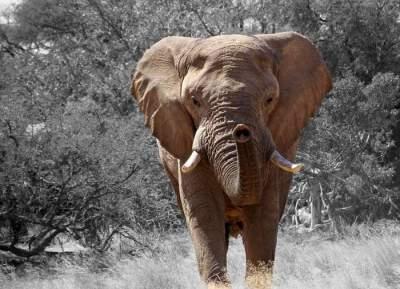 В Таиланде спасли слонят, провалившихся в глубокую яму