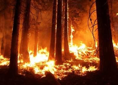В Китае борются с лесными пожарами