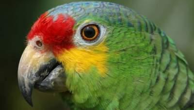 В Бразилии задержали попугая из наркокартеля